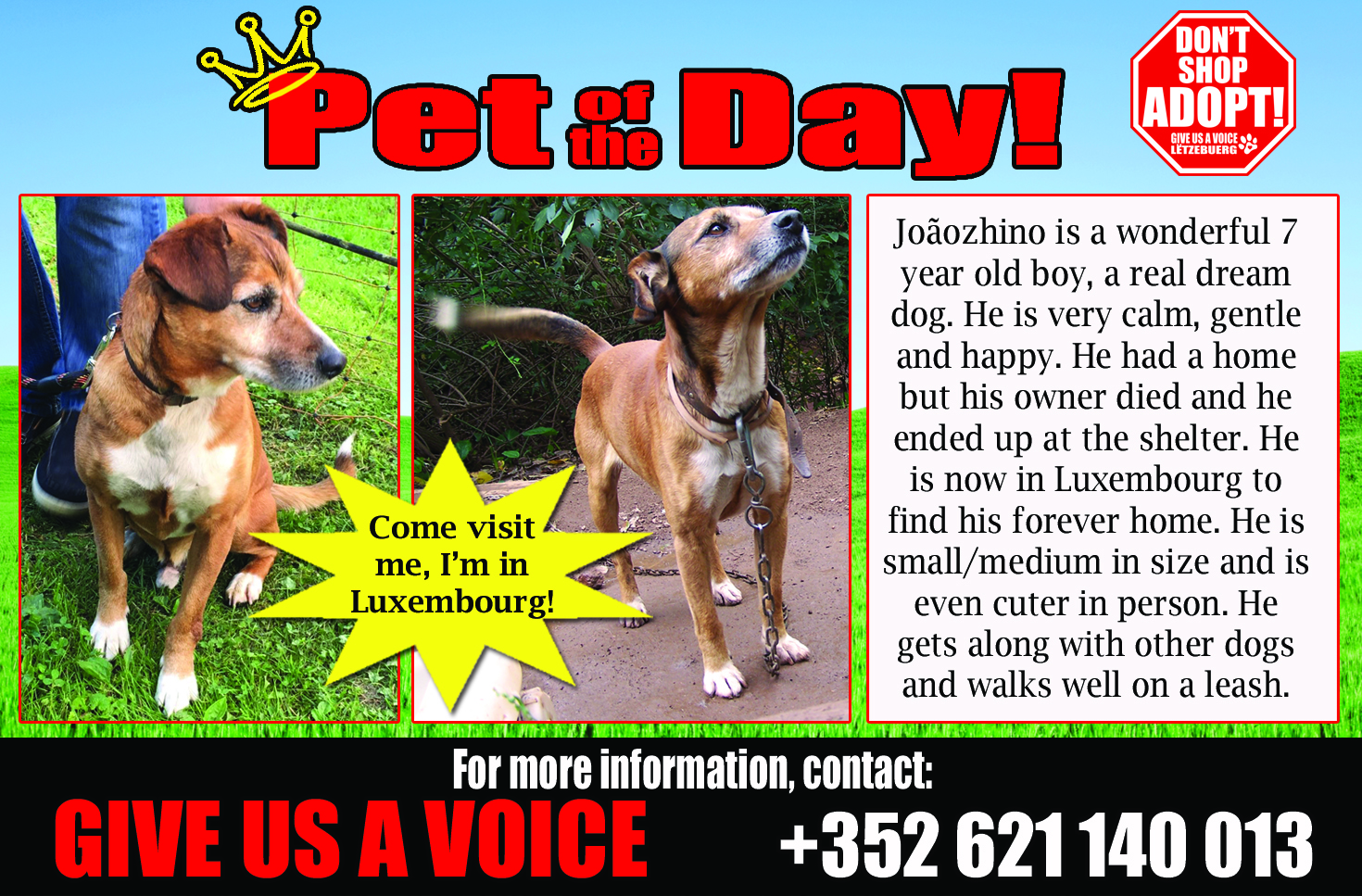06-29-16 Pet of the Day