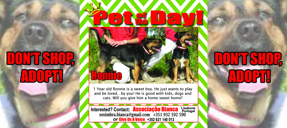 06-30-15 Pet of the Day for website