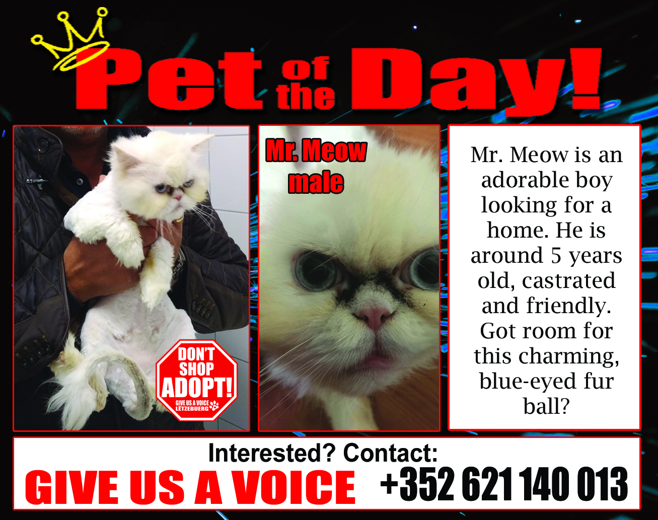 07-01-16 Pet of the Day