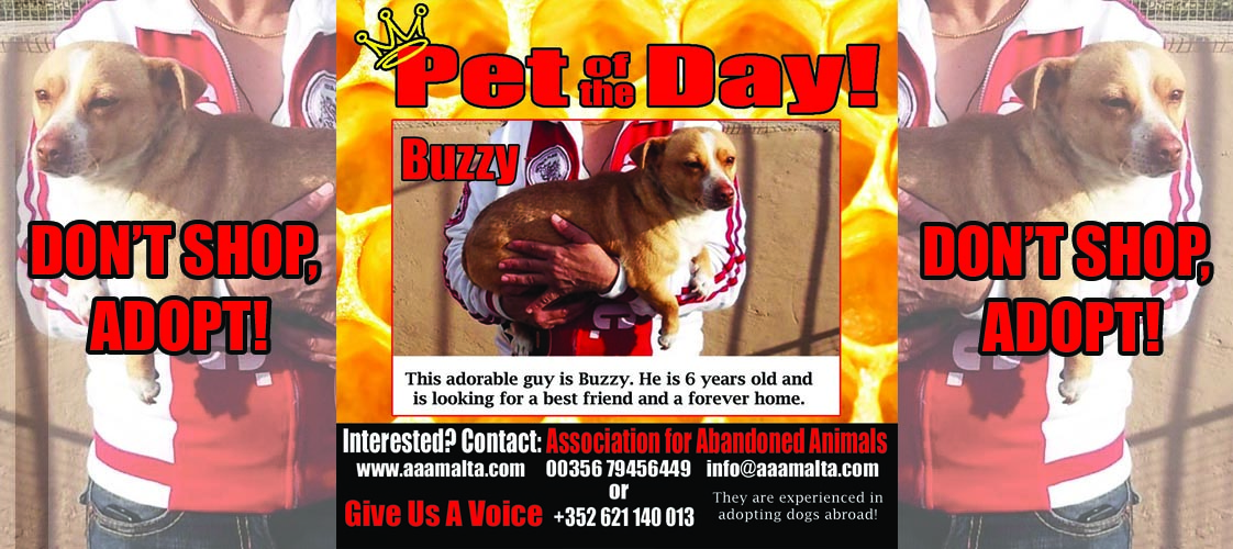 07-03-15 Pet of the Day for website copy