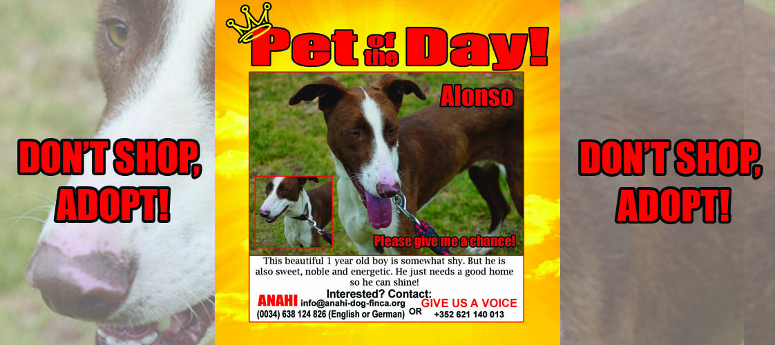 07-06-15 Pet of the Day for website copy