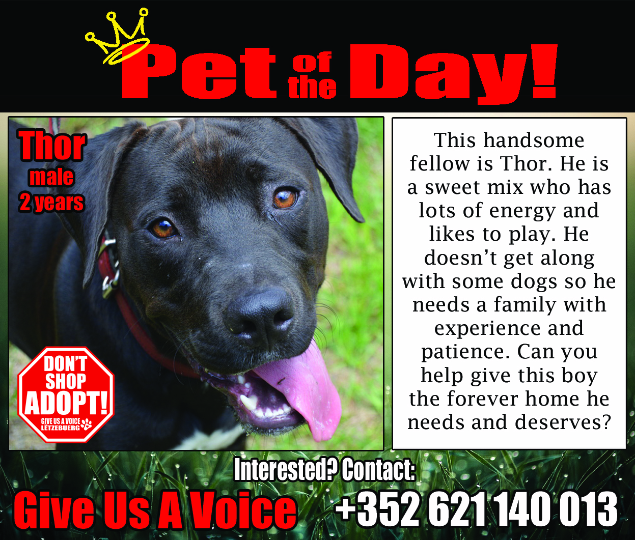 07-06-16 Pet of the Day