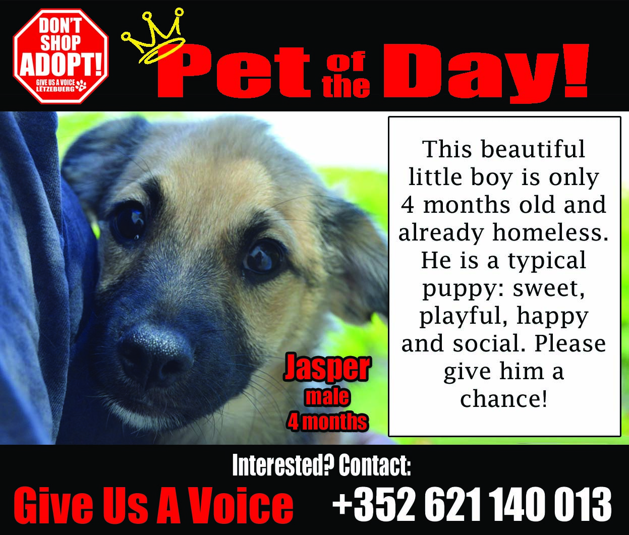 07-12-16 Pet of the Day