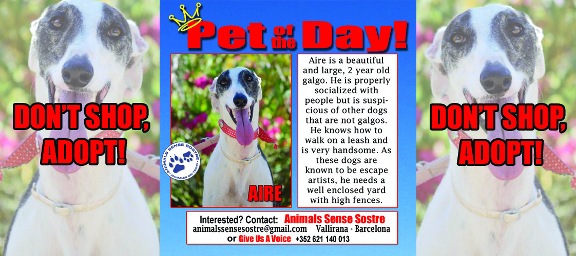 07-16-15 Pet of the Day for website