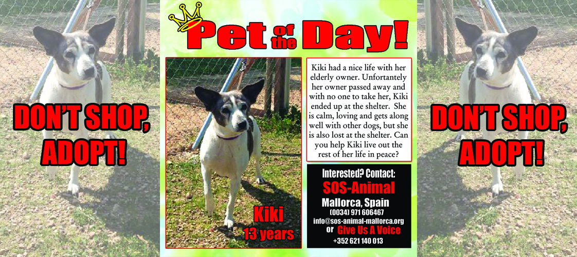 07-24-15 Pet of the Day for website