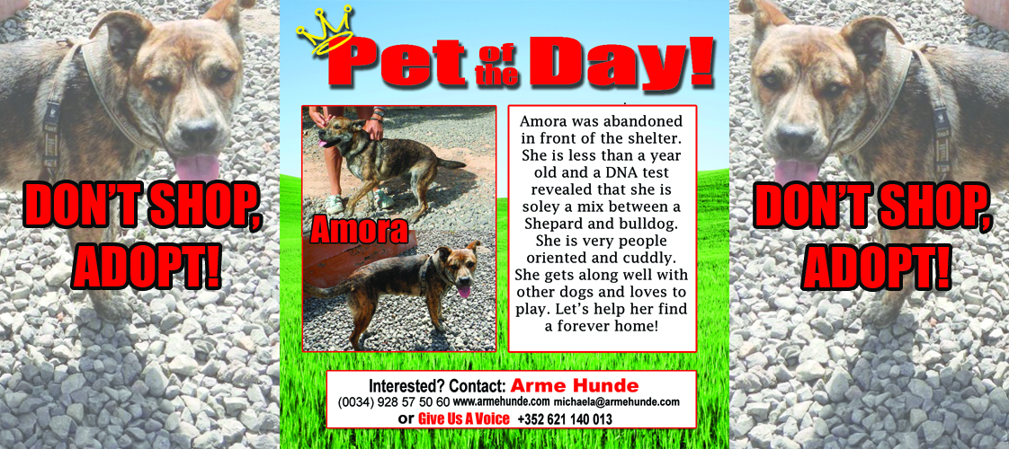 07-31-15 Pet of the Day for website