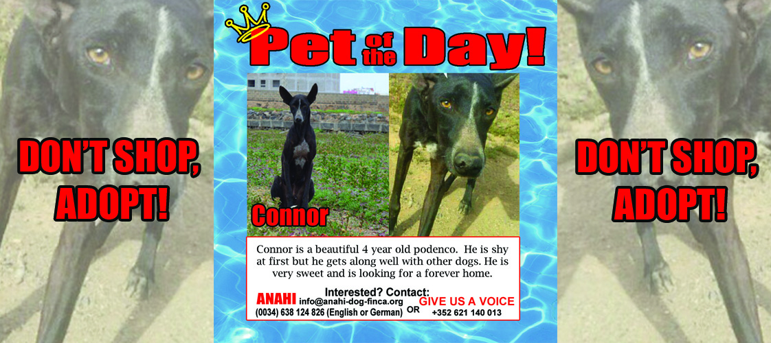08-05-15 Pet of the Day for website
