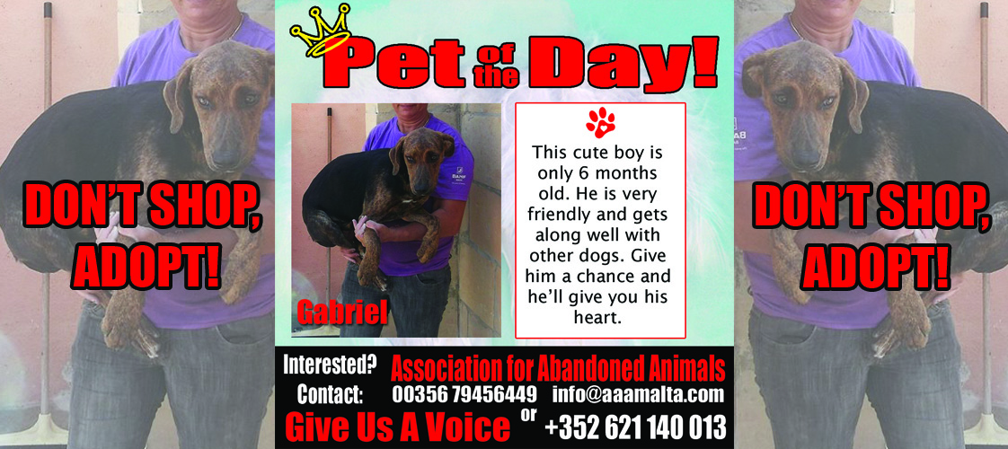 08-17-15 Pet of the Day for website