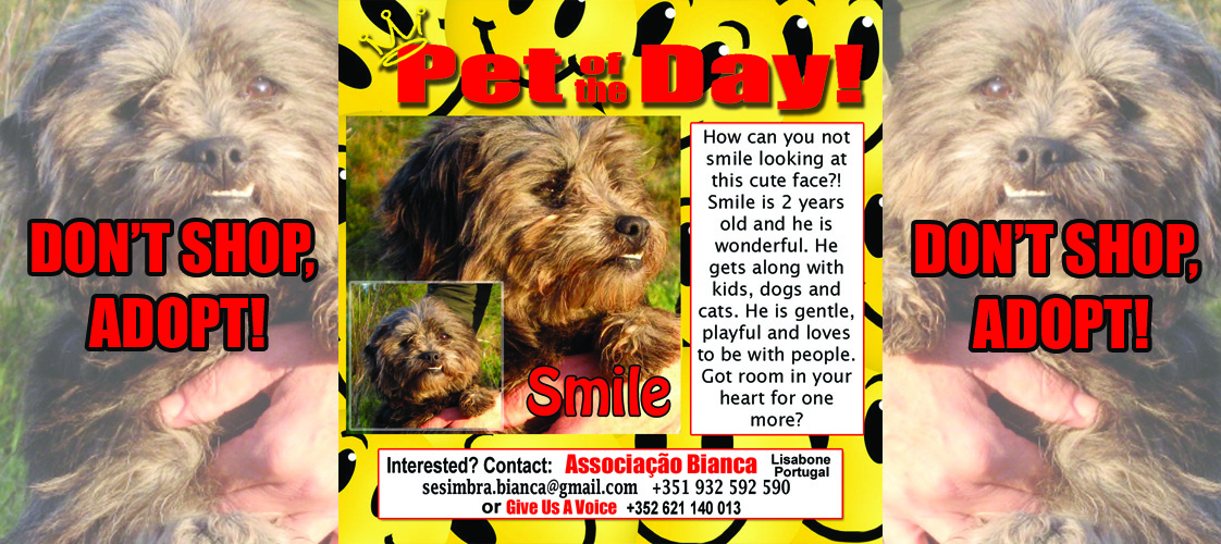08-18-15 Pet of the Day for website