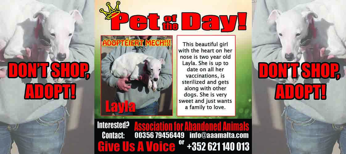 08-19-15 Pet of the Day for website
