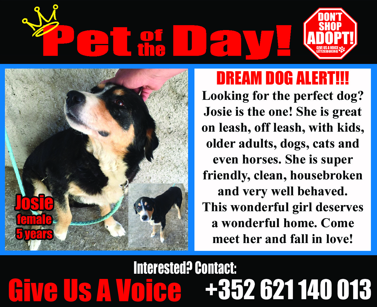 08-24-16 Pet of the Day