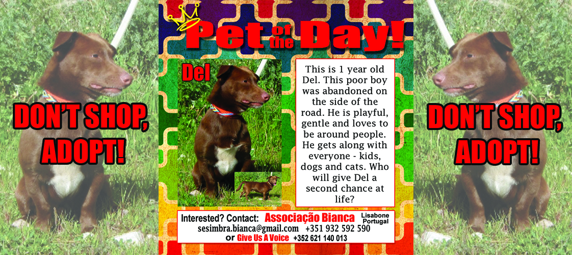 08-26-15 Pet of the Day for website