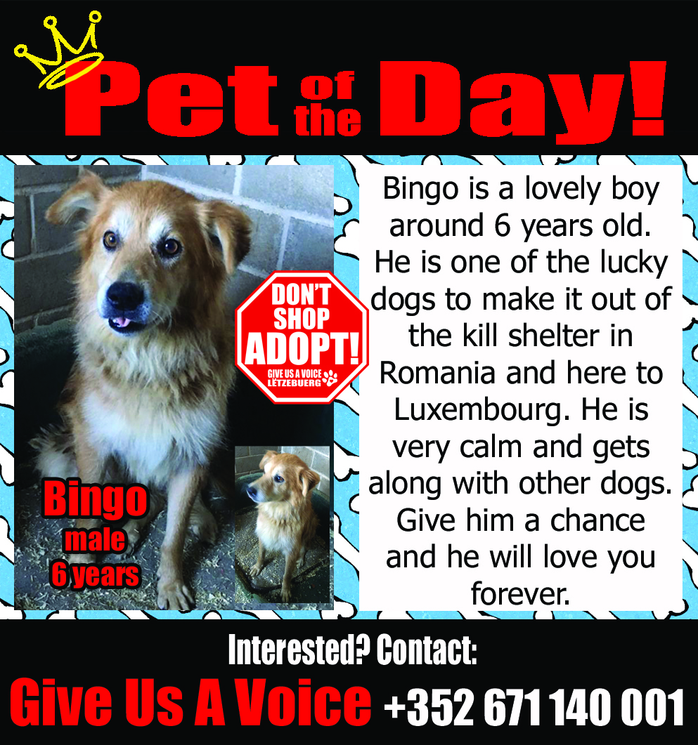 09-02-16 Pet of the Day