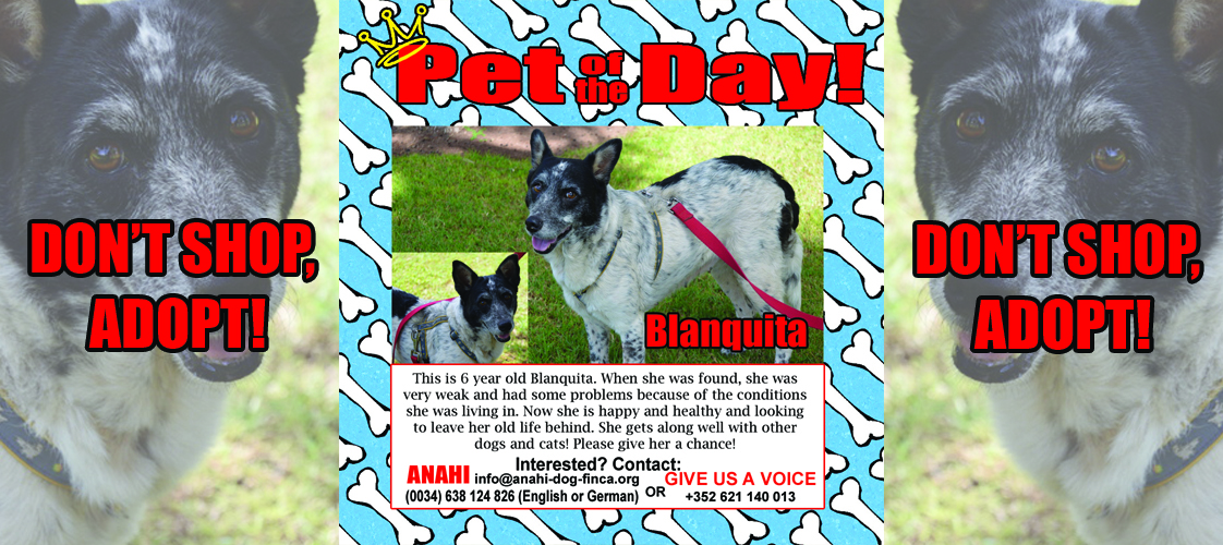 09-09-15 Pet of the Day for website