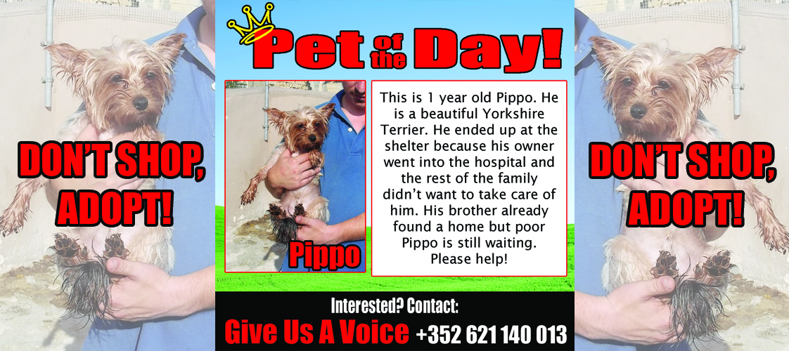 09-14-15 Pet of the Day for website