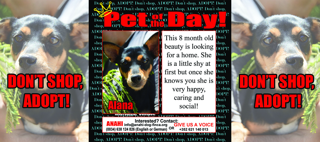 09-16-15 Pet of the Day for website
