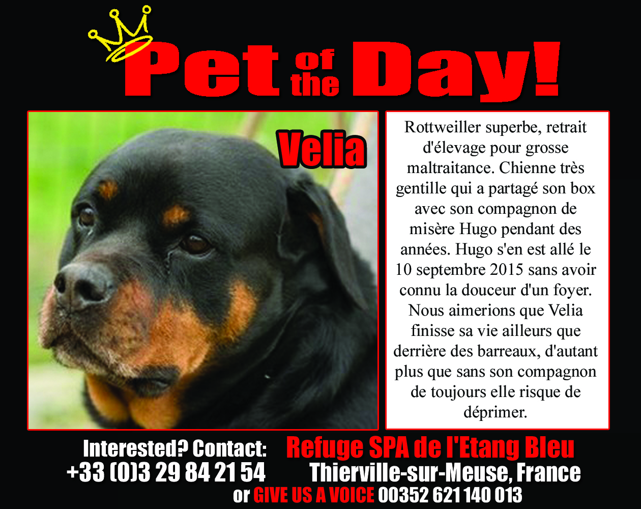 09-17-15 Pet of the Day