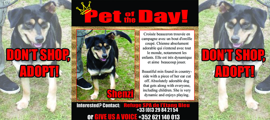 09-22-15 Pet of the Day for website
