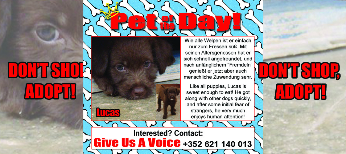 10-01-15 Pet of the Day for website