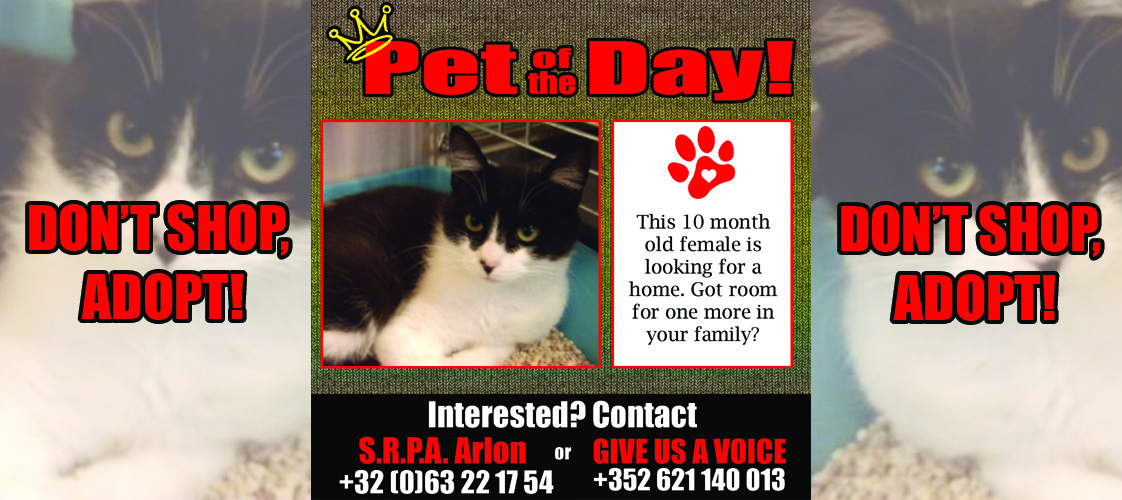 10-02-15 Pet of the Day for website