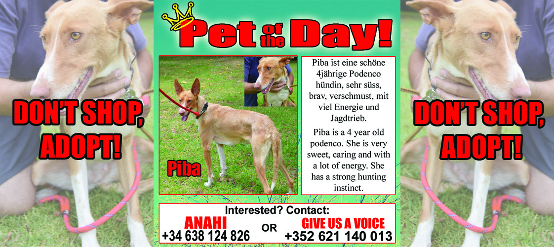 10-19-15 Pet of the Day for website