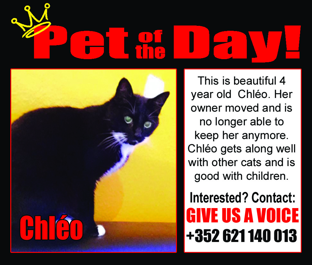10-23-15 Pet of the Day copy