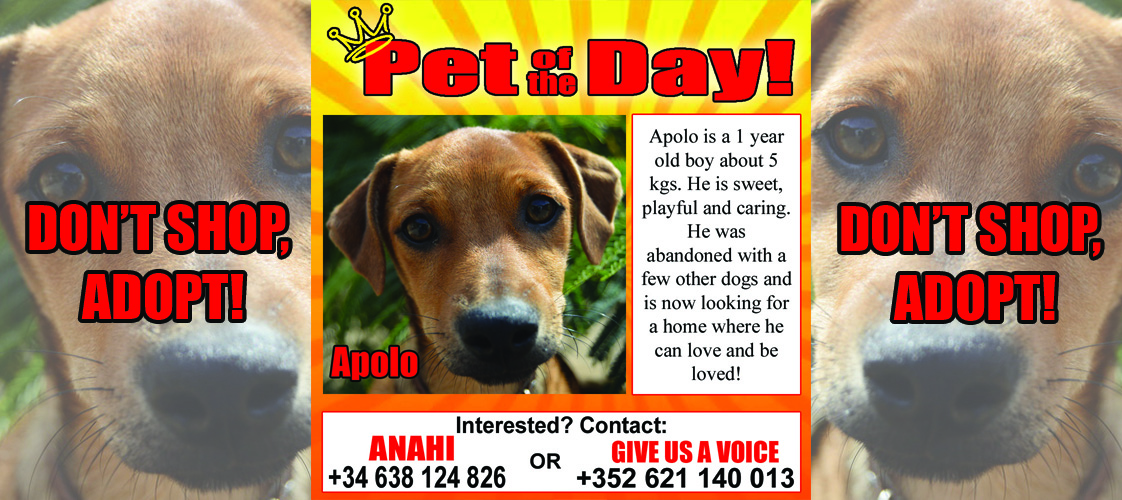 10-27-15 Pet of the Day for website