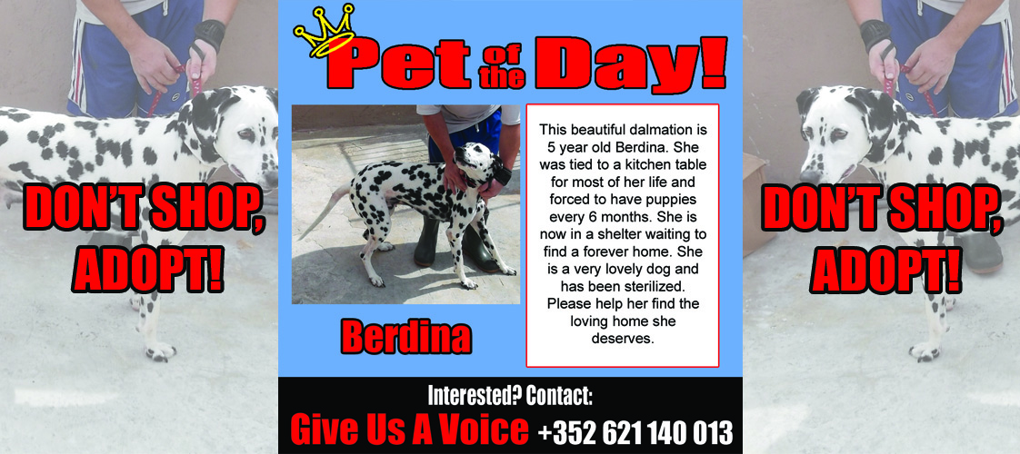 10-29-15 Pet of the Day for website