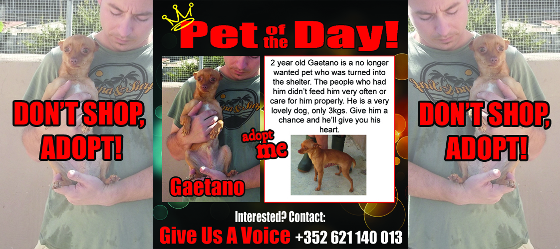 10-30-15 Pet of the Day for website