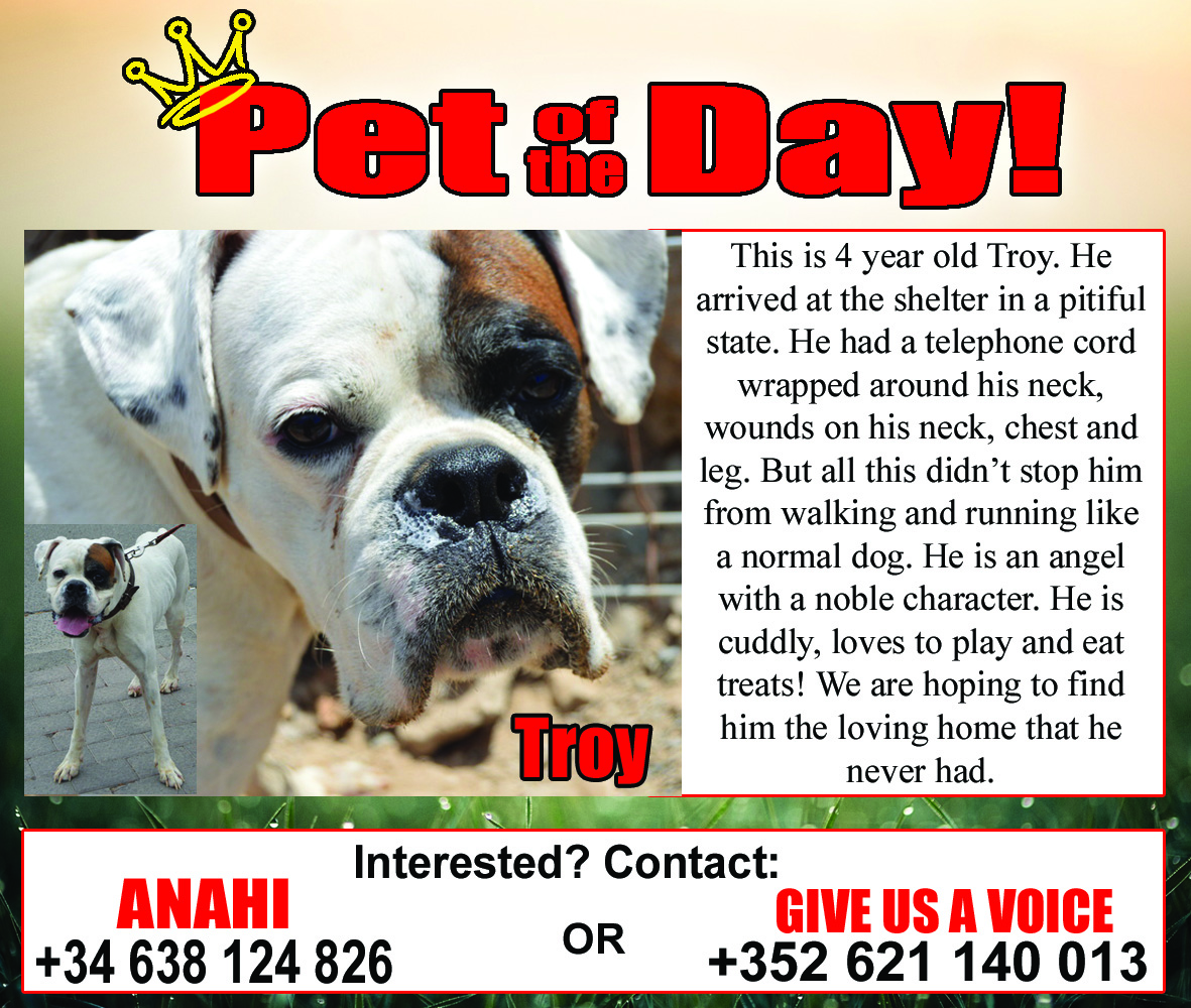 11-06-15 Pet of the Day