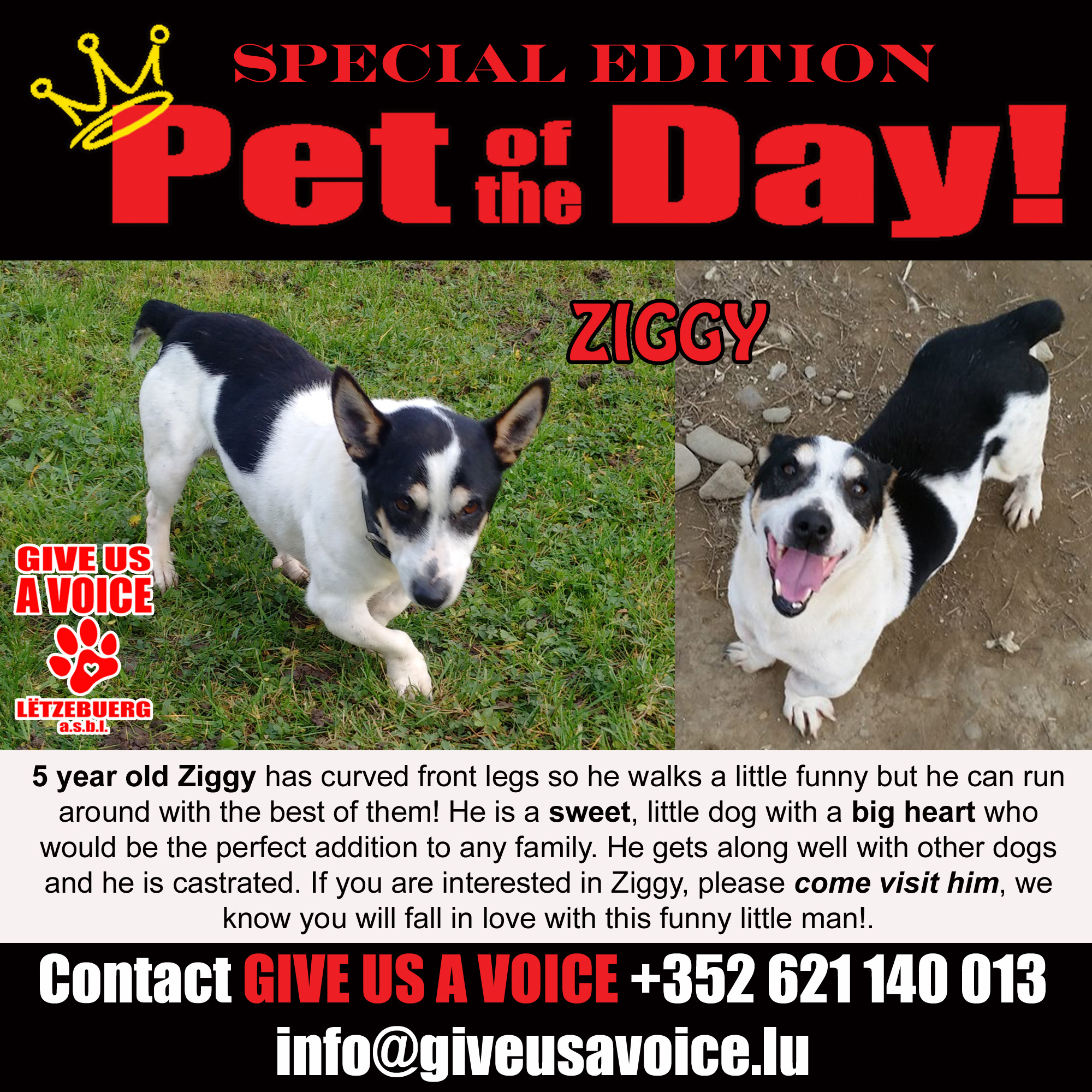 11-11-15 Pet of the Day