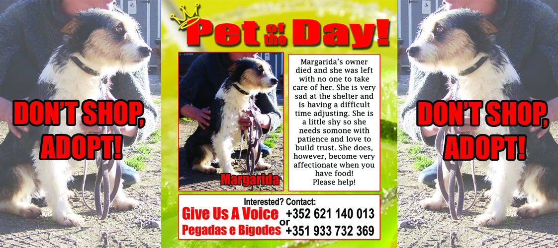 11-13-15 Pet of the Day for website