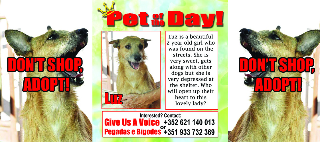 11-18-15 Pet of the Day for website