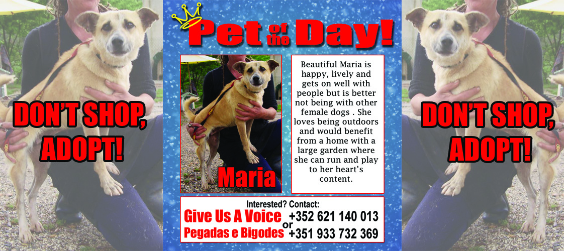 11-25-15 Pet of the Day for website