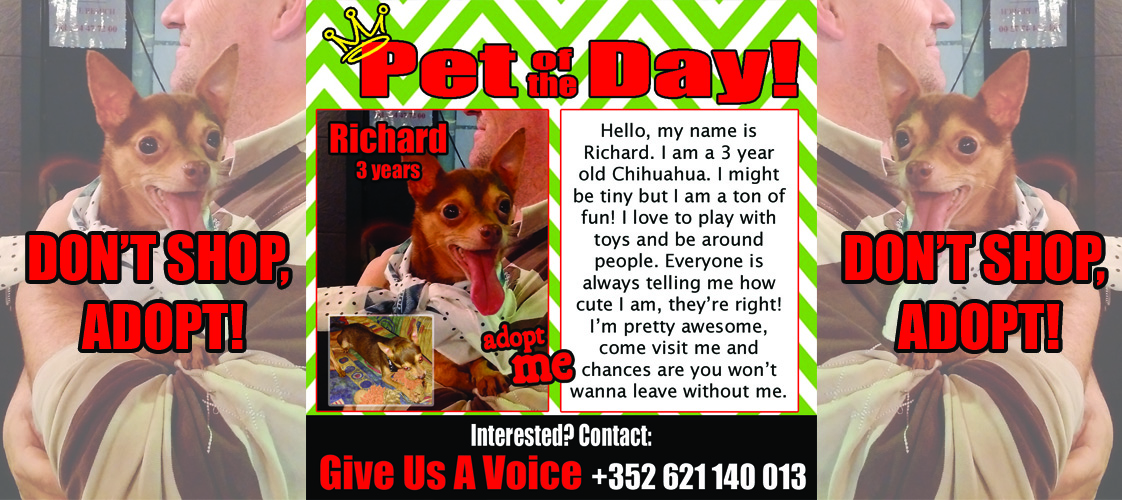 12-02-15 Pet of the Day for website