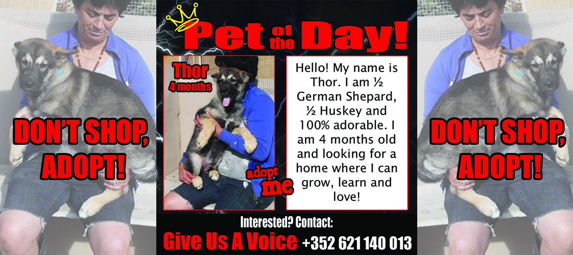 12-04-15 Pet of the Day for website