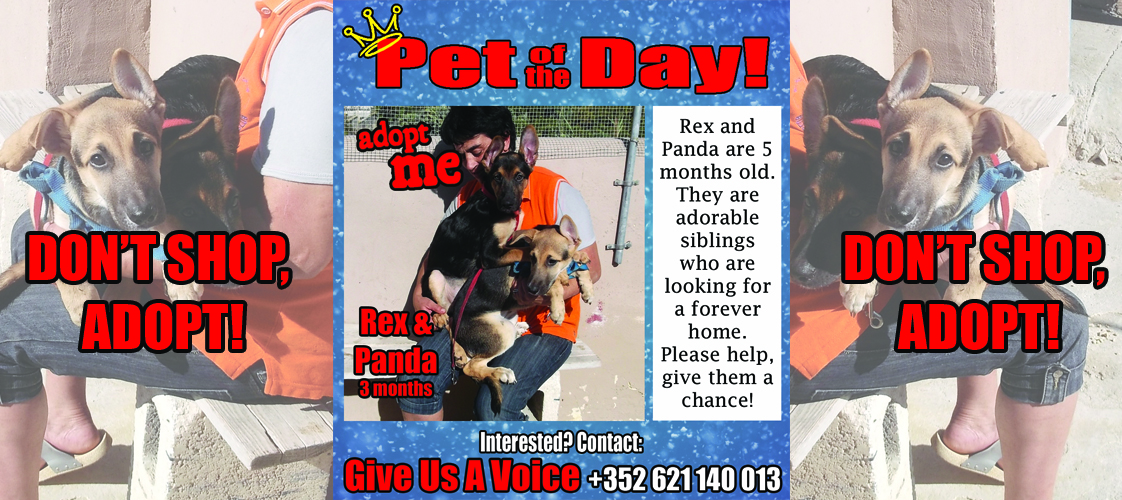 12-22-15 Pet of the Day for website