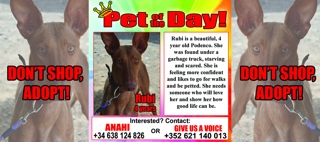 12-31-15 Pet of the Day for website