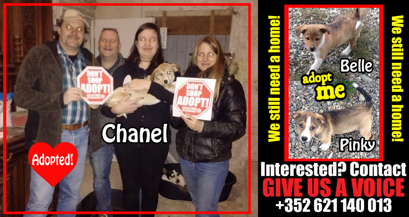 Chanel Adopted! copy