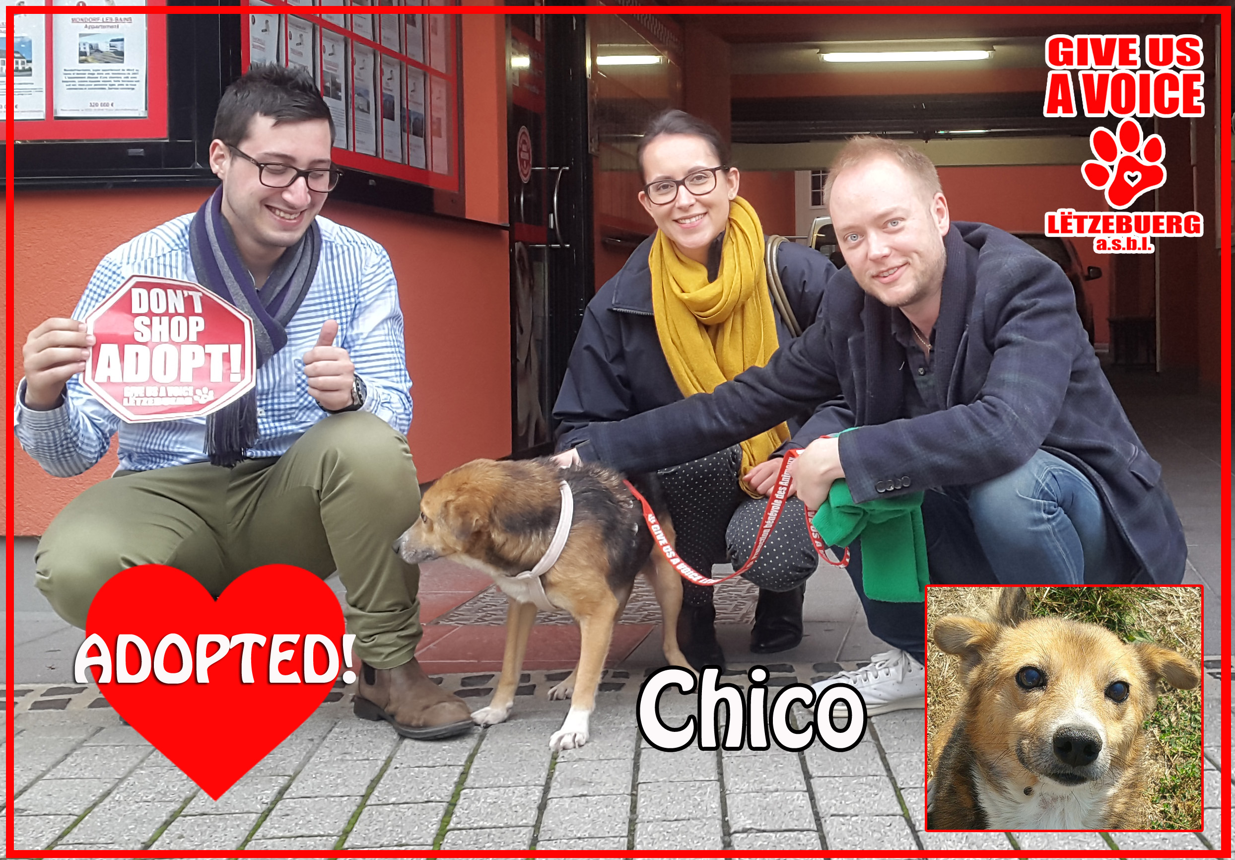 chico-adopted-copy