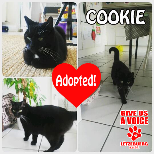 Cookie adopted copy
