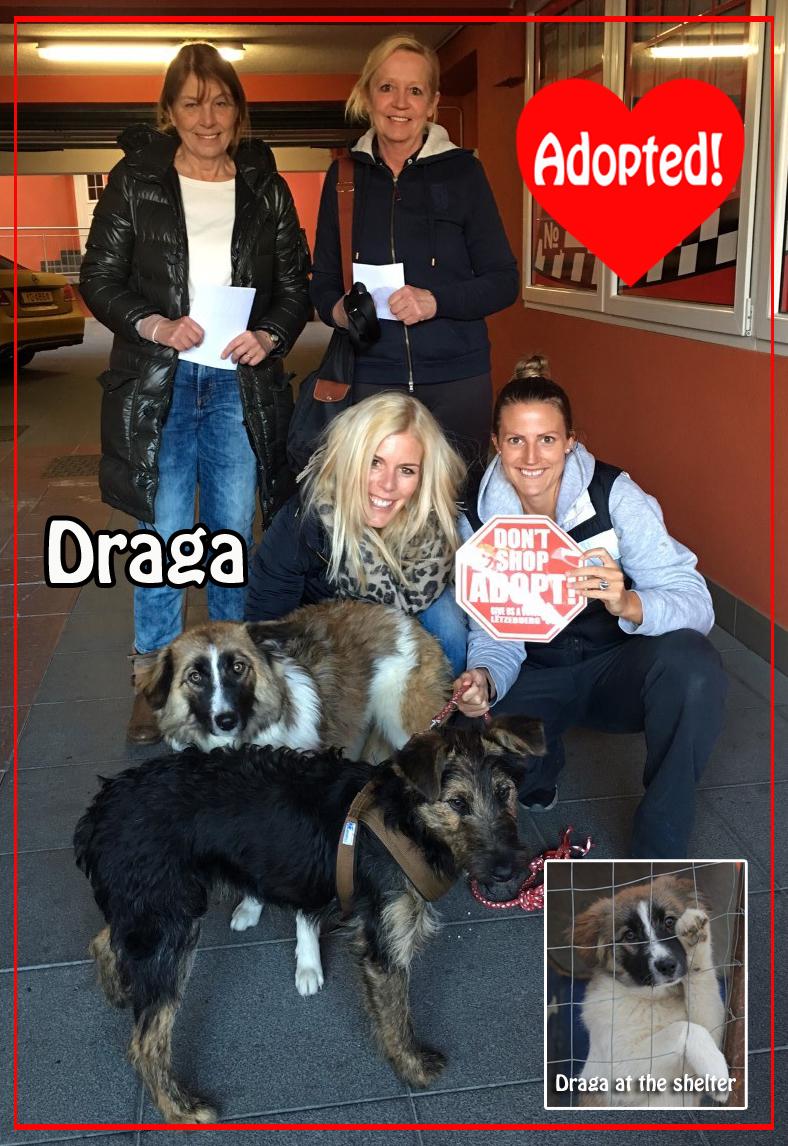 Draga adopted! copy