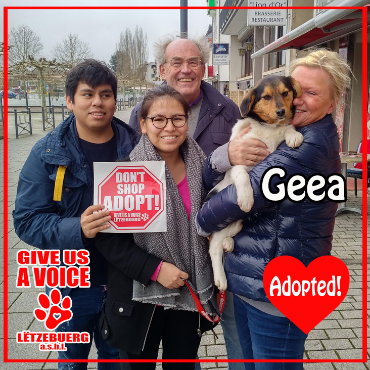 Geea adopted! copy