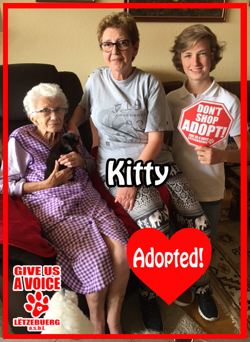 Kitty Adopted! copy