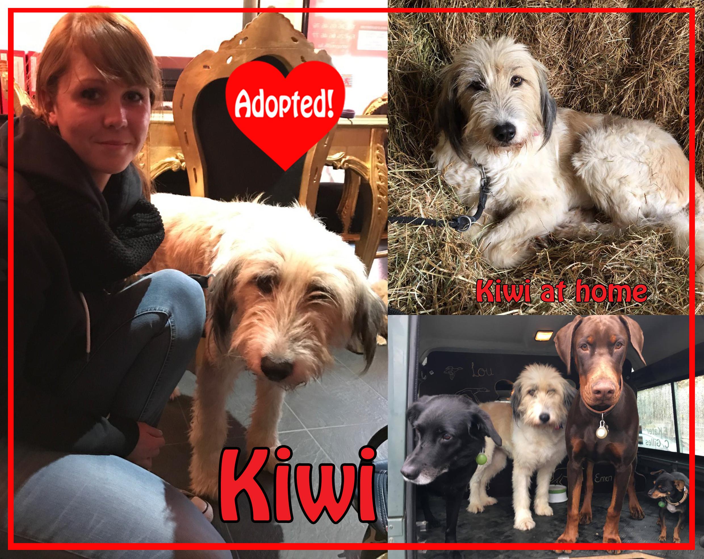 kiwi-adopted-copy