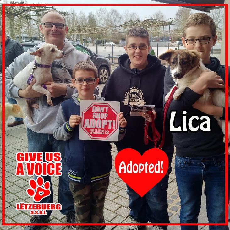 Lica Adopted! copy