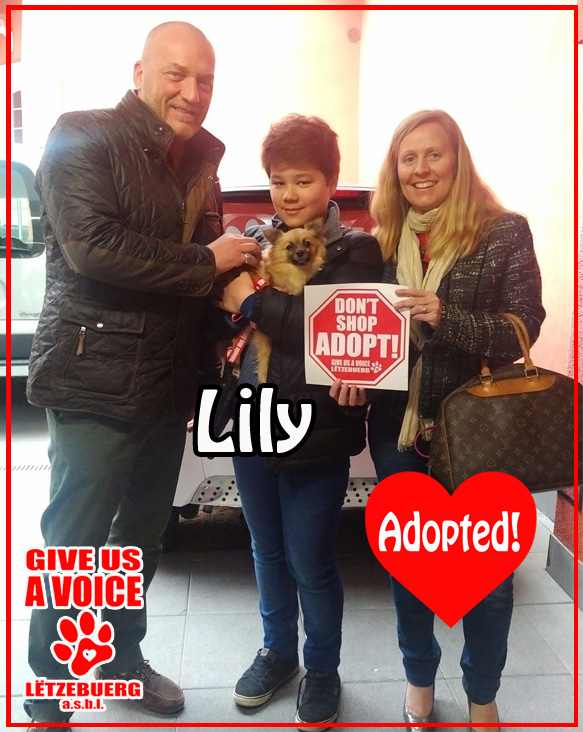 Lily Adopted!