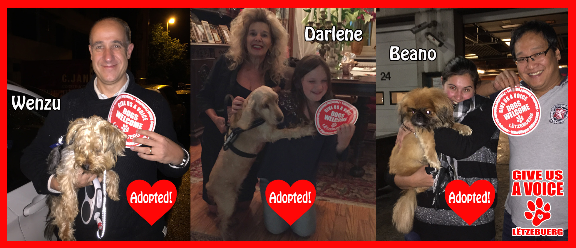 Malta dogs adopted! copy
