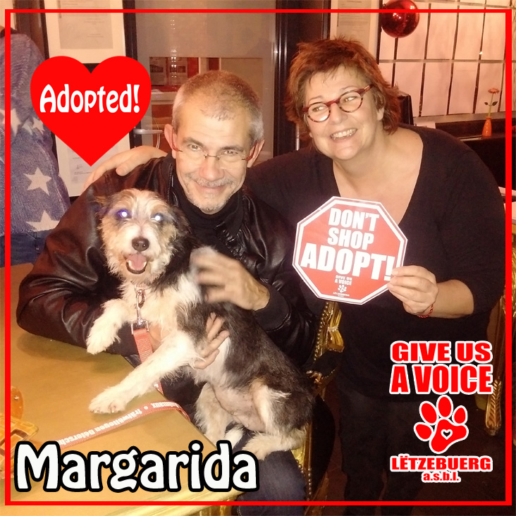 Margarida Adopted copy