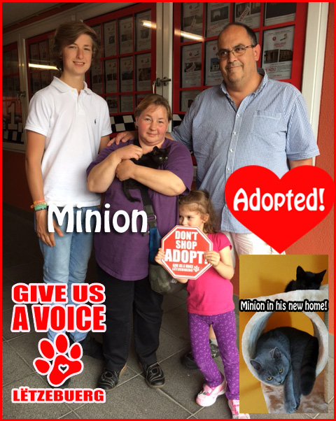Minion adopted! copy